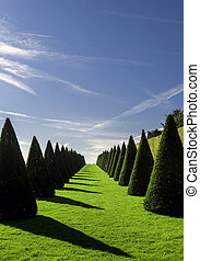 Formal garden - Beautiful park trees over blue sky. formal...