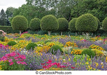 Formal garden, flowers and box tree cut in France.