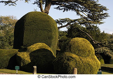 formal garden with lovely shaped hedges and trees