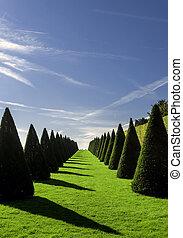Formal garden - Beautiful park trees over blue sky. formal...