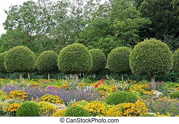 Formal garden, flowers and box tree cut  France
