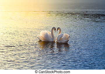 formando, cisnes, dois, coração