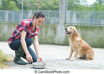 formation, chenil, dédié, girl, chien