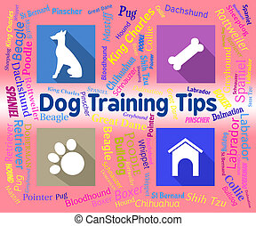 formation, chien, canines, pointes