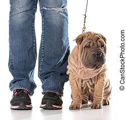 formation, chien