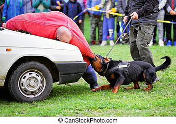 formation, chien, polico