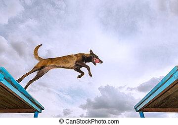 formation, chien, service