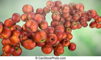formation of DNA. DNA strands are assembled from red apples...
