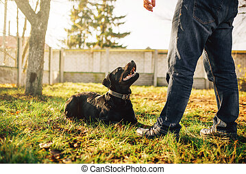 formation, service, chien, dehors, mâle, cynologist