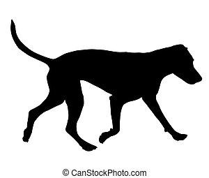formazione cane