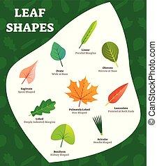 forme, biologi, blad, illustration., forlad, benævnt, vektor...
