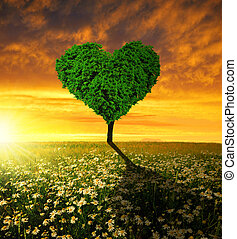 forme coeur, arbre