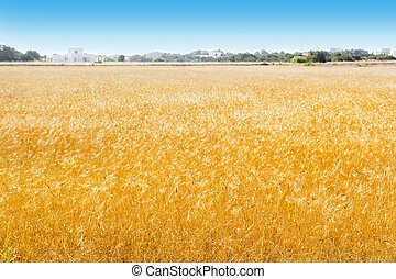 Formentera wheat fields in Balearic islands