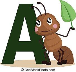 formica, alfabeto