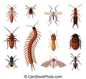 formica, diplura, set, insetti, controllo, mosca, concetto, ...
