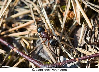 formica, primo piano
