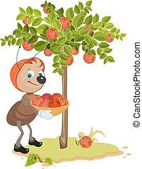 formica, raccogliere, mele, giardiniere