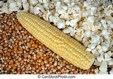 Forms of corn - An ear of corn between dry corn kernels and ...