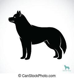 fornido, imagen, vector, perro, siberiano