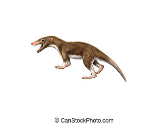 forntida, däggdjur, megazostrodon