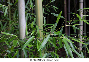 Forrest of bamboo