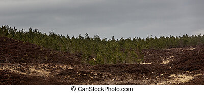 Forrest panorama - A panorama shot of a forrest in Scotland