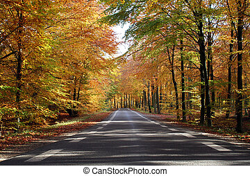 road through the forrest in the fall