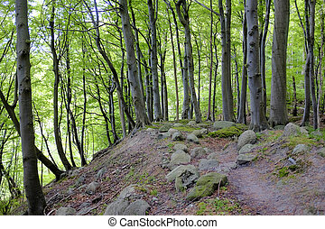 Rocky path in an old forrest
