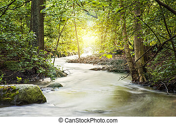 Forrest landscape with stream and sunlight.