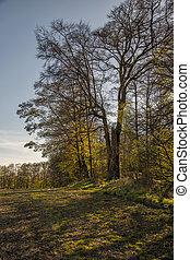 Forrest tree line