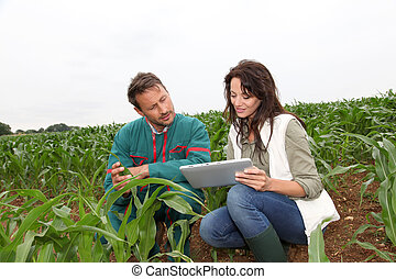 forscher, pflanze, analysieren, getreide, landwirt