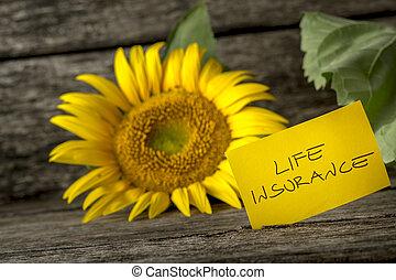 forsikring liv, begreb, hos, en, farverig, solsikke