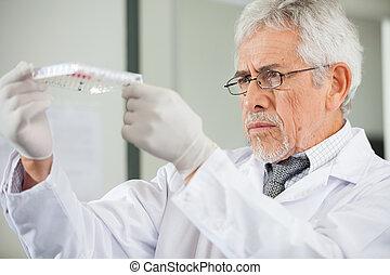 forskare, undersöka, microplate, in, laboratorium
