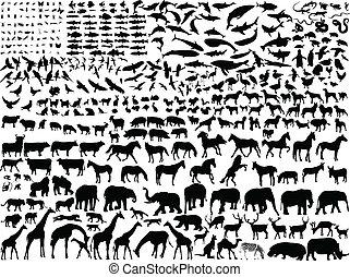 forskellige, dyr