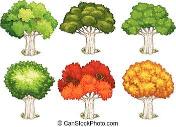 forskellige, forme, i, træer