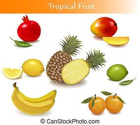 forskellige, frugt, gruppe, sorts