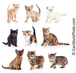 forskellige, kittens, samling