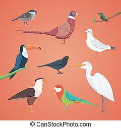forskellige, sæt, isolated., samling, fugl, vektor, fugle, cartoon