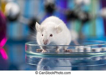 forskning, på, det mouses, kliniske, prøver