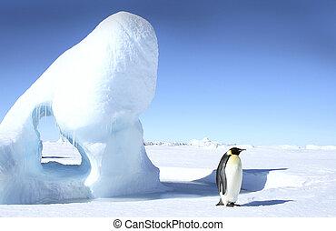 forsteri), emperador, (aptenodytes, pingüino