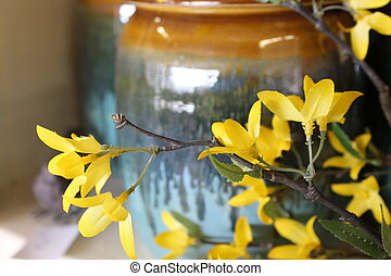 Forsythia and earthenware pot - The color yellow of...