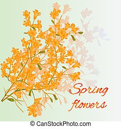 Forsythia spring flowers spring background place for text vector illustration