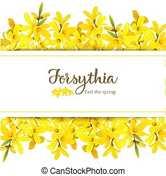 Forsythia suspensa card template with copy space on stripe, fluffy blossoming yellow spring tree. Golden Bell, flowers frame top and bottom. Vector illustration. for prints, posters, text, textile web