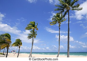 Fort Lauderdale tropical beach palm trees - Fort Lauderdale...