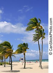 Fort Lauderdale tropical beach palm trees