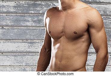 forte, torso