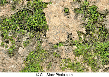 Fortress wall - Closeup details of old fortress wall of San ...