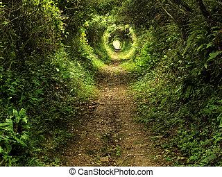 fortryllet, tunnel, sti, ind, den, skov