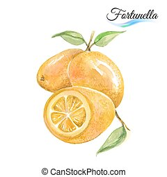 Fortunella - Fresh fruit fortunella isolated on white...