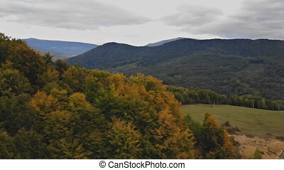 Forward aerial top view over in colorful autumn forest. Fall orange, green, yellow red tree woods.